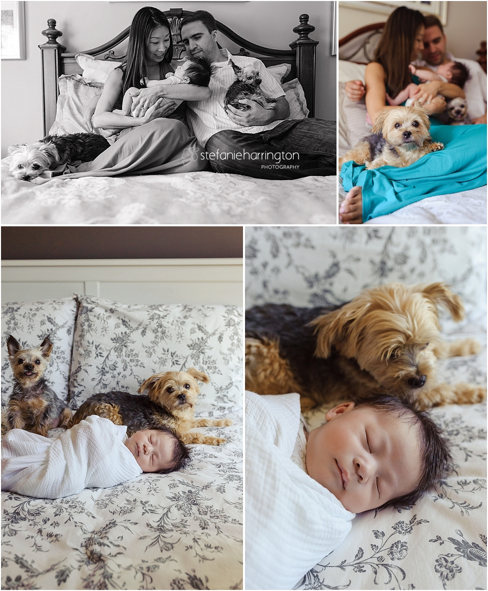 dc newborn family photography | tips for including your pet